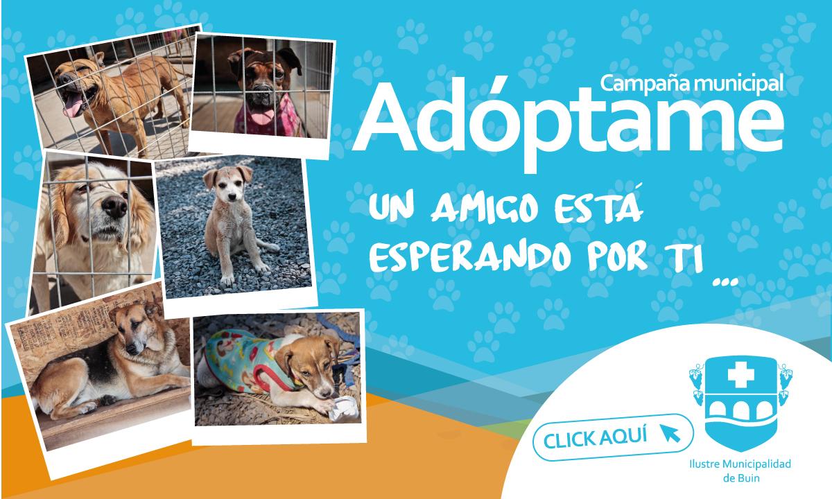Banner-adopta-una-mascota-en-buin