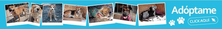 Campaña-Adopta-un-perrito-en-buin
